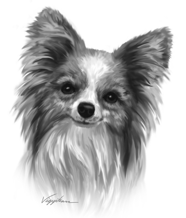 Papillon Photoshop Art Drawing SampleDog Black And White Drawing